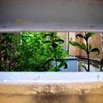 looking through a letterbox to see bare brick walls and lush green foliage